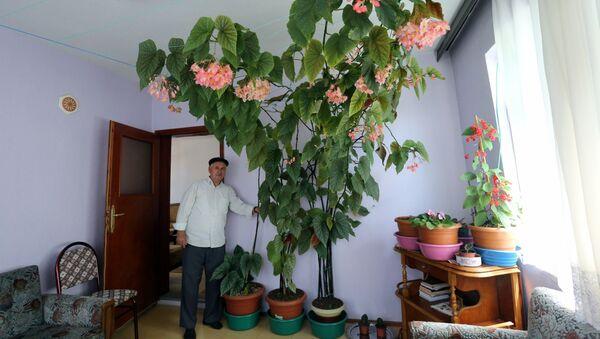 Eşinin hatırasını yaşatmak için baktığı çiçek odayı kapladı - Sputnik Türkiye