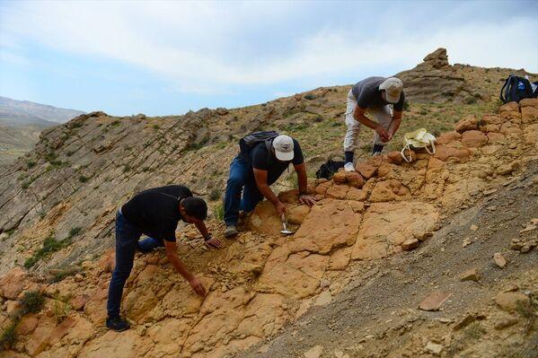 Iğdır'da bulunan bitki ve midye fosilleriyle ilgili bilimsel çalışma başlatıldı - Sputnik Türkiye