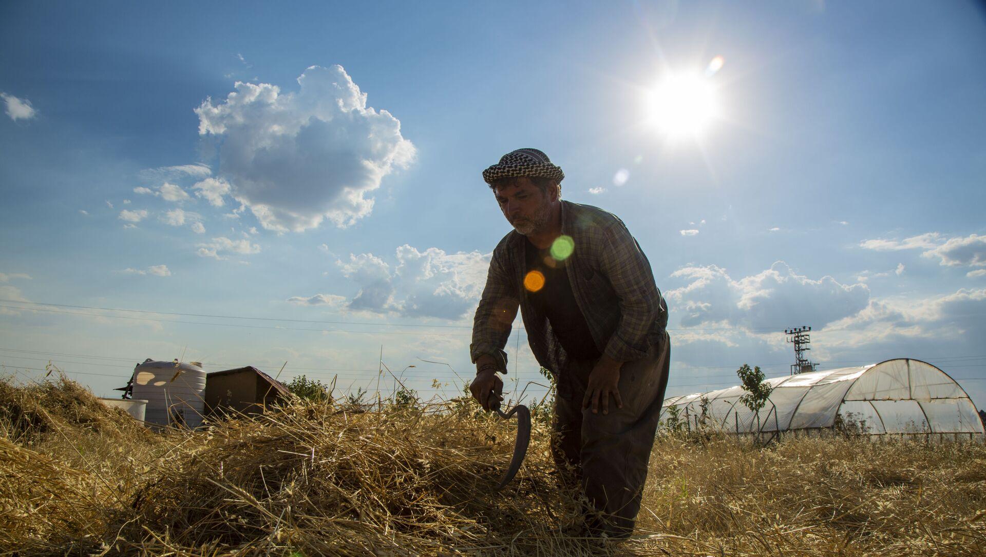 3 dönümlük tarlada yerel tohum mücadelesi: Doğayla barışık, toprakla uyumlu - Sputnik Türkiye, 1920, 09.05.2021