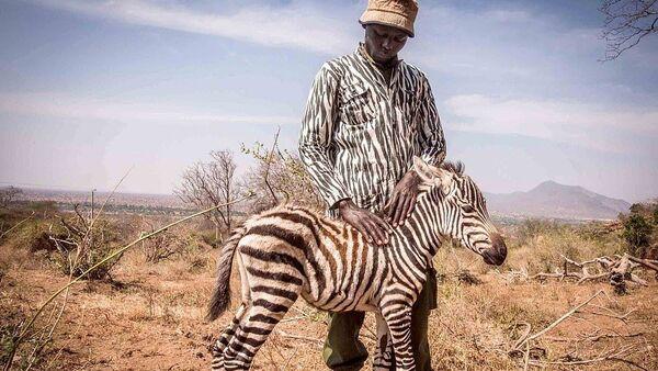 Öksüz kalan yavruya zebra kıyafeti giyerek annelik yapıyorlar - Sputnik Türkiye