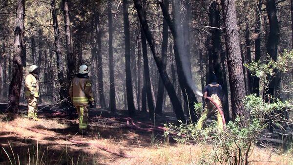 Pendik'te Aydos Ormanı'nda yangın - Sputnik Türkiye