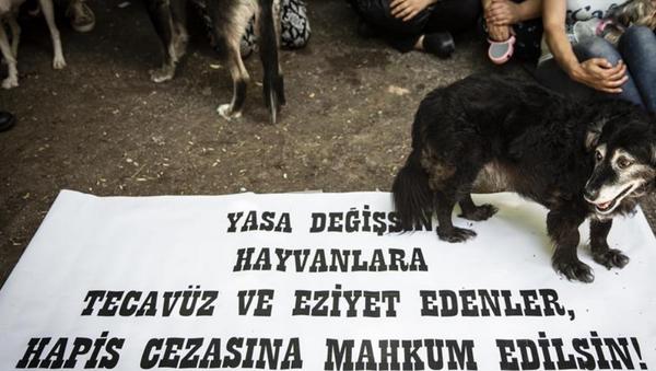Hayvan hakları, hayvana şiddet - Sputnik Türkiye