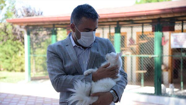 Ayasofya'nın ünlü kedisi Gli'ye arkadaş geldi - Sputnik Türkiye