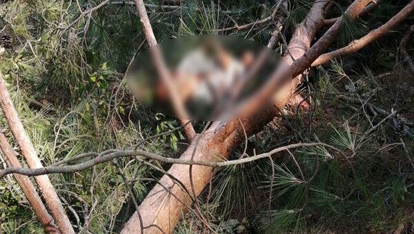Edirne'nin Keşan ilçesindeki ormanlık alanda ağaç kesimi yapan işçinin üzerine ağaç devrildi. Üzerine ağaç devrilen işçi, olay yerinde feci şekilde can verdi. - Sputnik Türkiye