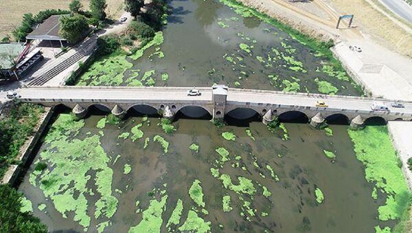 Tunca Nehri'nde alg patlaması - Sputnik Türkiye