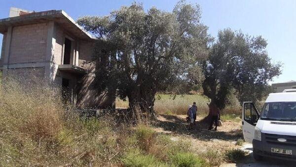 Kuşadası'nda bin 500 yıllık ağacın yanına yapılan villa yıkıldı - Sputnik Türkiye