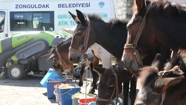 Katır - Zonguldak Belediyesi'nde katırlara emeklilik töreni - Sputnik Türkiye