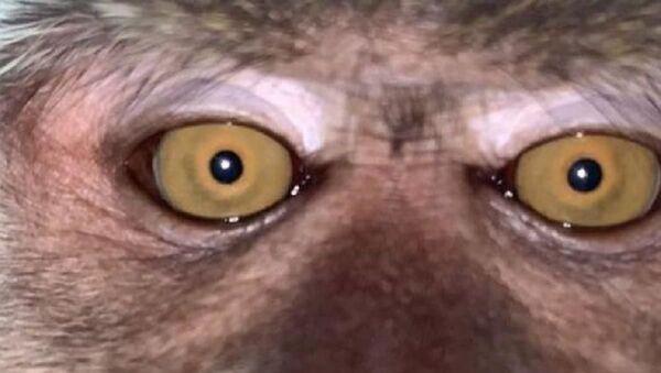 Kaybolan telefonunu ormanlık alanda buldu: Galerisinden maymun selfie'leri çıktı - Sputnik Türkiye
