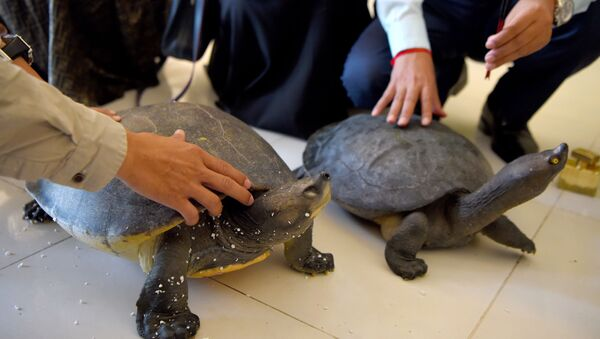 Kamboçya-kaplumbağa - Sputnik Türkiye