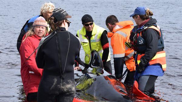 balina - kurtarma - Avustralya - Tasmanya - Sputnik Türkiye