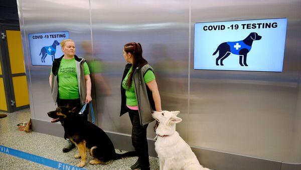 Finlandiya Helsinki Havalimanı, koku eğitimli köpekler, koronavirüs - Sputnik Türkiye