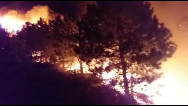 İzmir'in Bergama ilçesinde ormanlık alanda çıkan yangın, ekiplerin müdahalesi sonucu kontrol altına alındı. - Sputnik Türkiye
