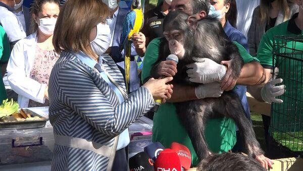 Gaziantep Büyükşehir Belediye Başkanı Şahin, bir maymunun taşlı saldırısına uğradı - Sputnik Türkiye