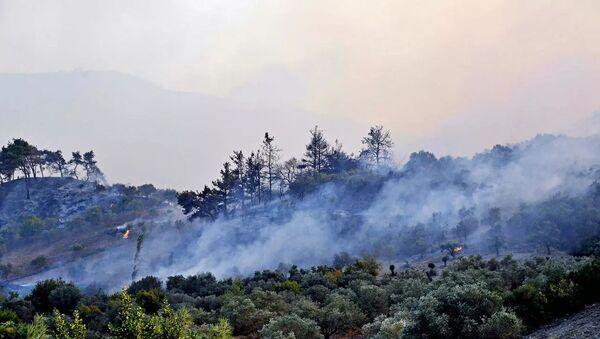 Suriye, orman yangını - Sputnik Türkiye