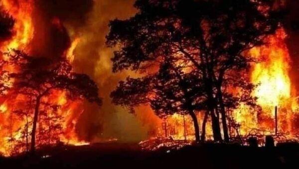Suriye'nin Lazkiye kenti kırsalında çıkan orman yangınında ölü sayısı 3'e yükseldi. - Sputnik Türkiye