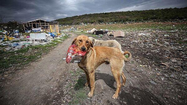 Sokak köpeği, köpek - Sputnik Türkiye