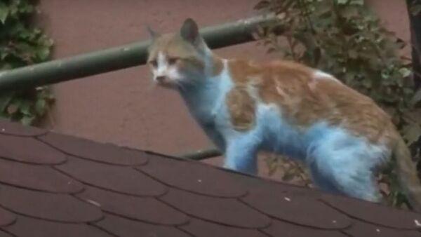 Küçükçekmece'de mavi kediler kameraya yansıdı - Sputnik Türkiye