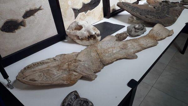 Adnan Oktar'ın evlerinden çıkan fosiller - Sputnik Türkiye