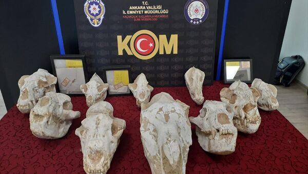 Adnan Oktar'ın evinden çıkan fosiller - Sputnik Türkiye