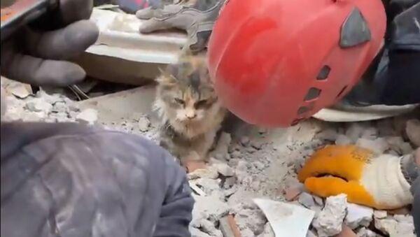 Rıza Bey Apartmanı enkazından çıkarılan kedi - Sputnik Türkiye