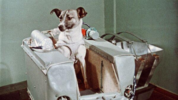 Uzay çıkan ilk canlı Layka adlı köpek - Sputnik Türkiye