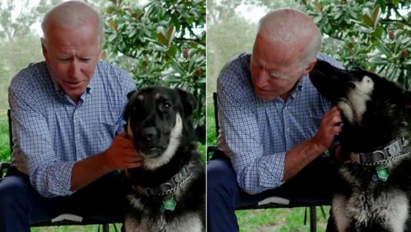 Joe Biden'ın köpeği Major - Sputnik Türkiye