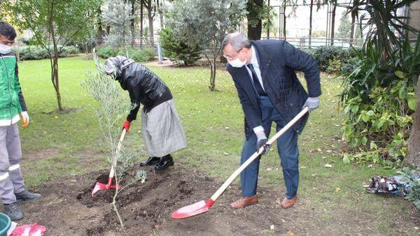 Rusya'nın İstanbul Başkonsolosluğu'nda zeytin ağacı dikme - Sputnik Türkiye