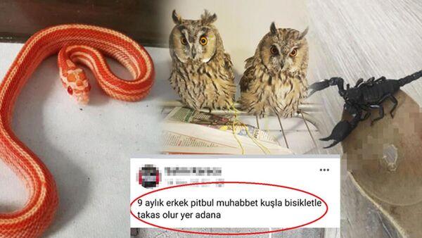 hayvan satışı - Sputnik Türkiye