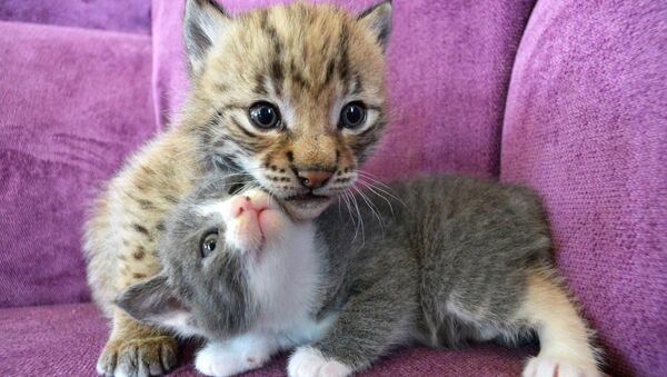 Kedi - kediler - küçük kediler - Sputnik Türkiye