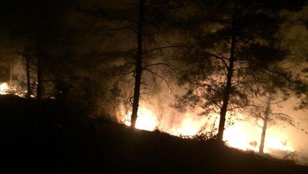 Hatay'ın İskenderun ilçesinde orman yangını çıktı. - Sputnik Türkiye