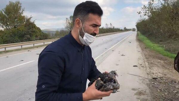 Sakarya'da yaralı Sığırcık kuşları - Sputnik Türkiye