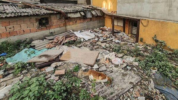 kedilerin parçalandığı metruk bina - Sputnik Türkiye