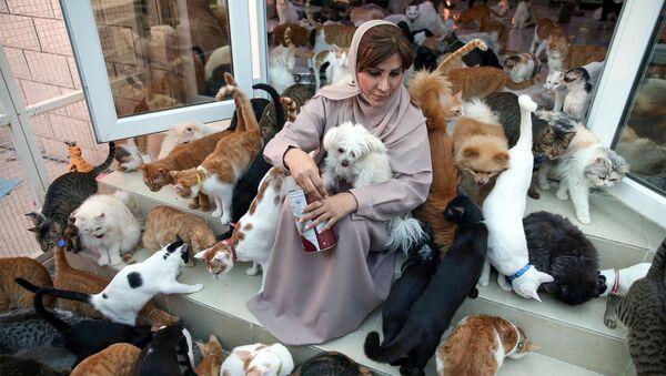 Yüzlerce kediyle yaşayan Ummanlı kadın - Sputnik Türkiye