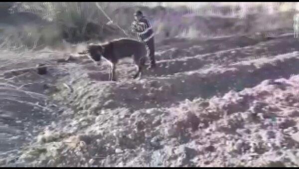 Eşeğe işkence ettiler - Sputnik Türkiye