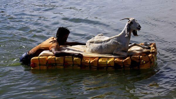 Etiyopya'nın Tigray bölgesindeki çatışmalardan kaçanlardan biri, keçisini, bidondan yapılma sal sayesinde Sudan tarafına geçirebildi.  - Sputnik Türkiye