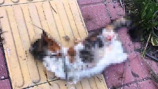 Bir kedi daha bacakları kesilerek öldürüldü - Sputnik Türkiye