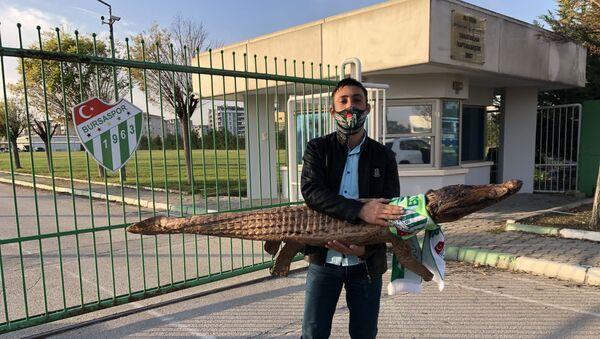 Bir Bursaspor taraftarı, Sudan'dan aldığı içi doldurulmuş gerçek bir timsahı, Özlüce İbrahim Yazıcı Tesisleri'ne getirdi. - Sputnik Türkiye