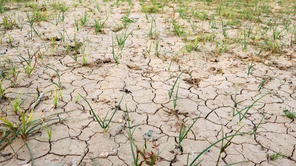Adana'da son 92 yılın en kurak kışı yaşanıyor - Sputnik Türkiye