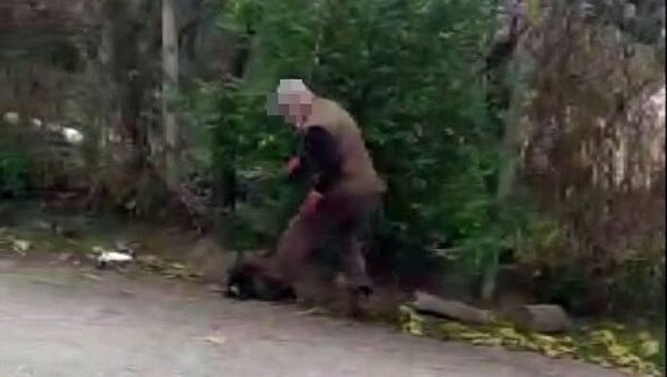 Yavru köpeğin üzerine bastı - Sputnik Türkiye