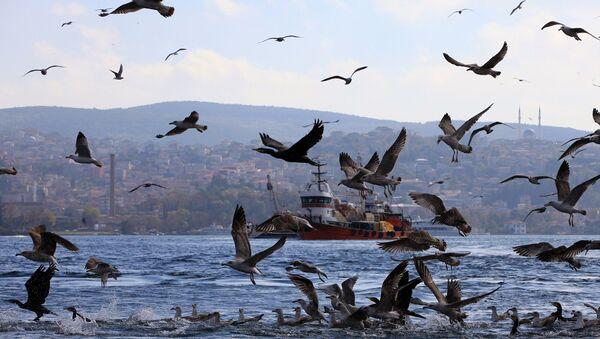 İstanbul - Boğaz - martı - balıkçı teknesi - Sputnik Türkiye