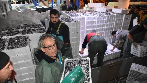 Balıkçılardan hamsi avının serbest olduğu İğneada'ya akın - Sputnik Türkiye