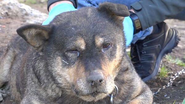 Ömercan Karkaç'ın Tony isimli köpeği  - Sputnik Türkiye