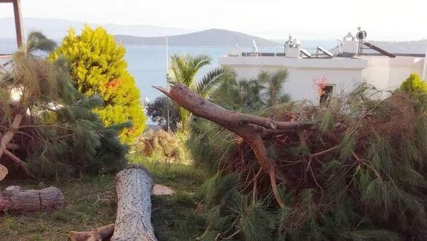 Muğla'da manzarayı engellediği gerekçesiyle kesilen ağaçlar - Sputnik Türkiye