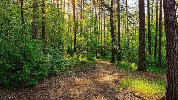 Dava süreci devam eden ağaçları sokağa çıkma yasağında kesmişler - Sputnik Türkiye