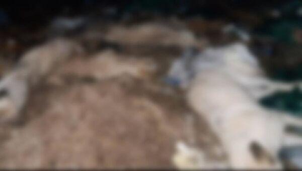 Nevşehir'de ayakları bağlanmış 9 köpek ölü bulundu - Sputnik Türkiye