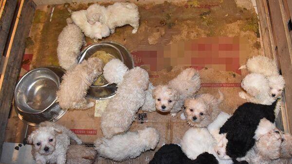 Otobüsün bagajında 23 yavru köpek ele geçirildi - Sputnik Türkiye