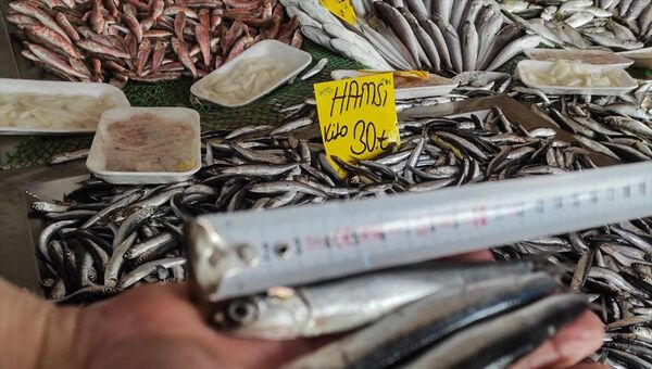 hamsi, balık pazarı - Sputnik Türkiye