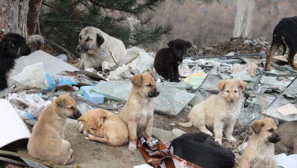 Ankara'da dağlık alana terk edilen 7 köpek öldü - Sputnik Türkiye