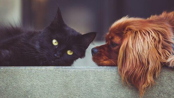 kedi, köpek - Sputnik Türkiye