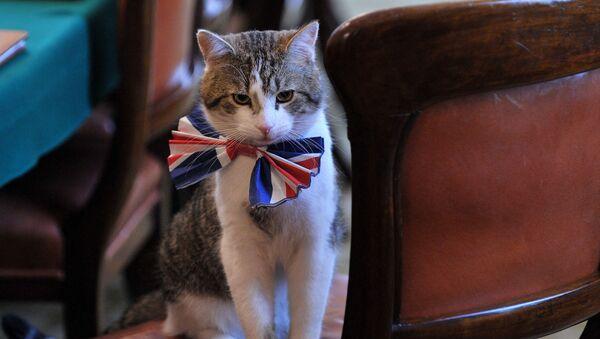 Кот Ларри в бабочке в резиденции британских премьеров на Даунинг-стрит, 10 в Лондоне, Великобритания - Sputnik Türkiye